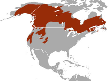 American Marten Range Map (North America)
