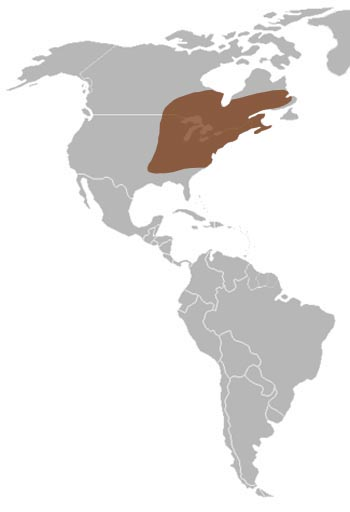 American Toad Range Map (East Canada & East USA)