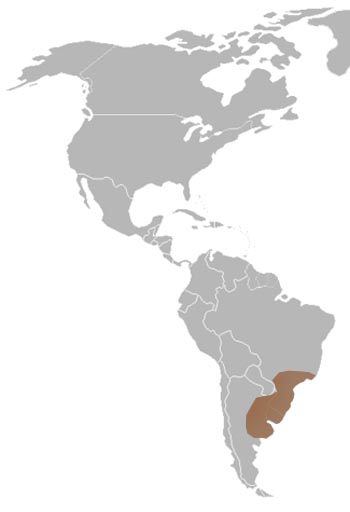 Argentine Horned Frog Range Map (South America)