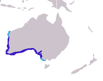 Australian Sea Lion Range Map (Australia)