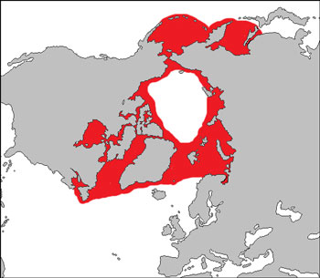 Bearded Seal Range Map (Arctic Waters)