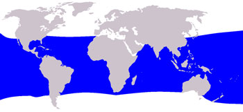 Bryde's Whale Range Map (Tropical & Temperate Waters Worldwide)