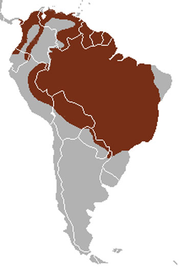 Bush Dog Range Map (Central & South America)