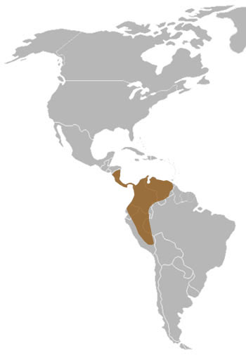 Bushy-Tailed Olingo Range Map (Central & South America)