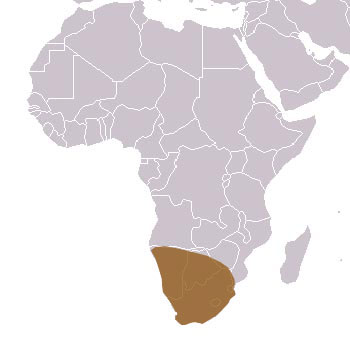 Cape Fox Range Map (Africa)