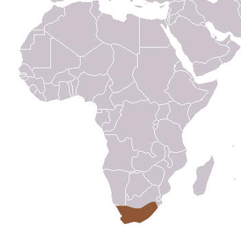 Cape Grey Mongoose Range Map (Africa)