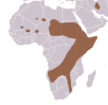 Cheetah Range Map (Africa & W Asia)