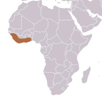 Common Kusimanse Range Map (Africa)