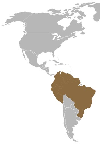 Common Squirrel Monkey Range Map (South America)