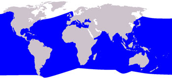 Cuvier's Beaked Whale Range Map (Warm Waters Worldwide)