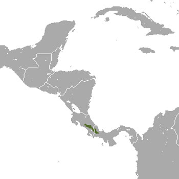 Dice's Cottontail Range Map (Central America)
