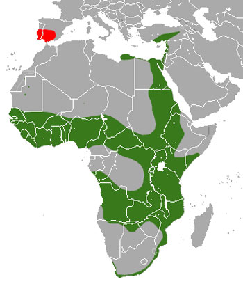 Egyptian Mongoose Range Map (Europe & Africa)