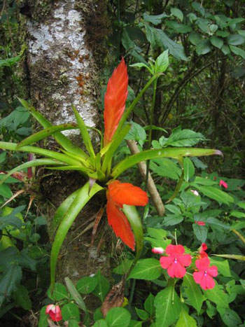 An Epiphyte in Costa Rica.