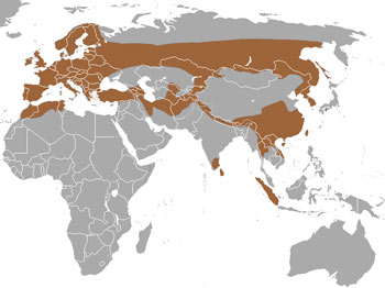 European Otter Range Map (Europe, Africa & Asia)