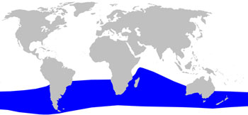 Gray's Beaked Whale Range Map (Waters in the Southern Hemisphere)