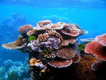 A variety of corals on Flynn Reef near Cairns