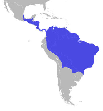 Harpy Eagle Range Map (S Mexico to S America)