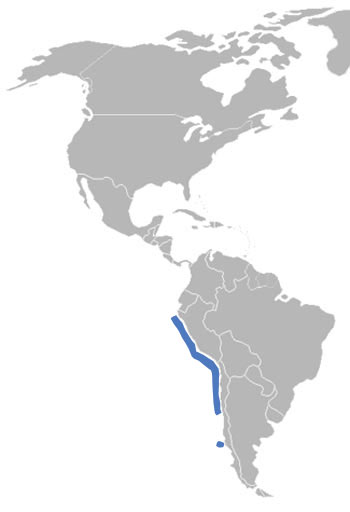 Humboldt Penguin Range Map (South America)