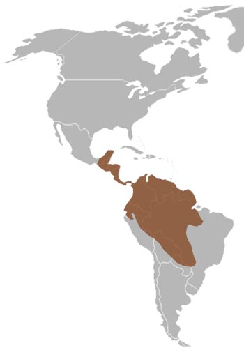 Jaguar Range Map (Central & South America)