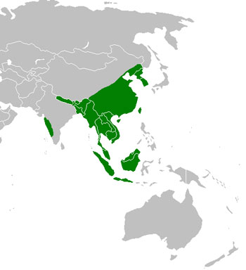 Leopard Cat Range Map (Asia)