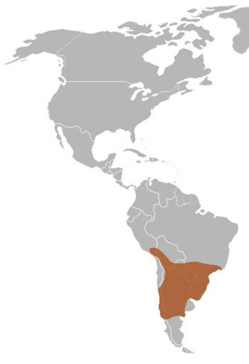 Lesser Grison Range Map (South America)