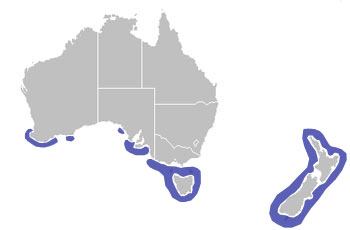 Little Penguin Range Map (S Australia & New Zealand)
