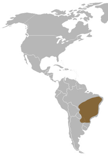 Maned Wolf Range Map (South America)