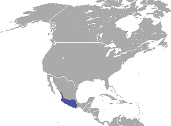 Mexican Cottontail Range Map (Mexico)