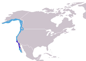 Northern Elephant Seal Range Map (West Coast of N America)