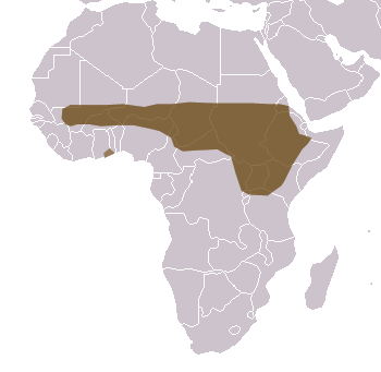 Olive Baboon Range Map (Africa)