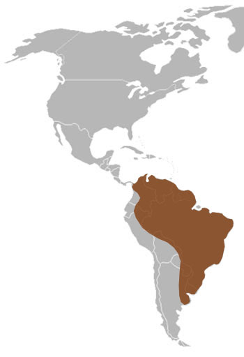 Oncilla Range Map (South America)