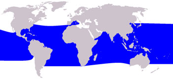 Pygmy Killer Whale Range Map (Tropical & Subtropical Waters Worldwide)