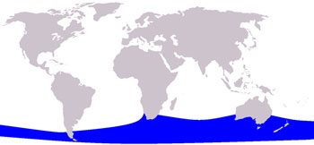Pygmy Right Whale Range Map (Southern Ocean)
