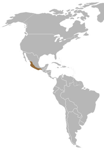 Pygmy Spotted Skunk Range Map (Central America)