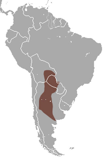 Screaming Hairy Armadillo Range Map (South America)