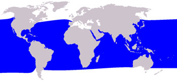 Short-Finned Pilot Whale Range Map (Warm Waters Worldwide)