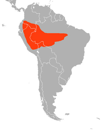 Small-Eared Dog Range Map (South America)