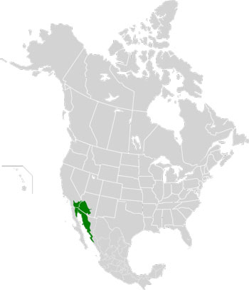 Location Map of the Sonoran Desert (North America)