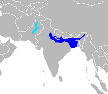 South Asian River Dolphin Range Map (India, Bangladesh, Nepal & Pakistan)