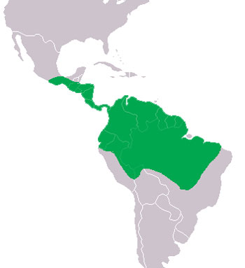 Spectacled Caiman Range Map (Central & South America)