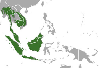 Sunda Pangolin Range Map (South East Asia)