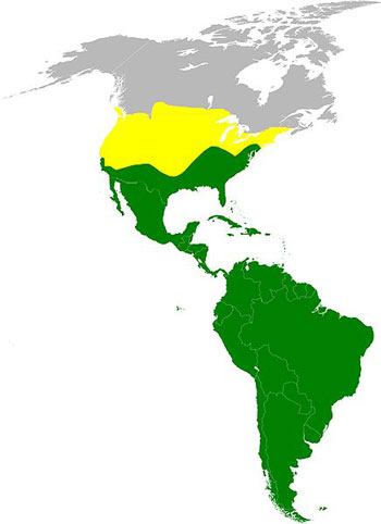 Turkey Vulture Range Map (North & South America)