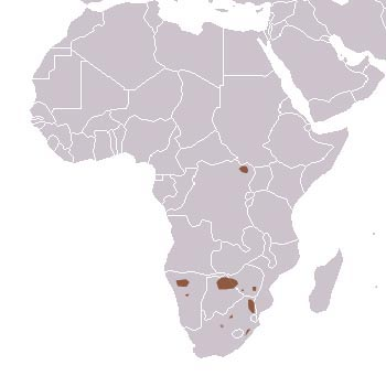 White Rhinoceros Range Map (Central & Southern Africa)