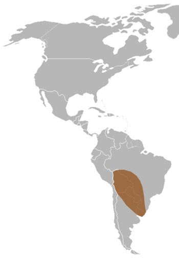 Yellow Anaconda Range Map (South America)